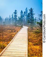 Wooden path in peat bog Bozi Dar, Czech Republic. Colorful...