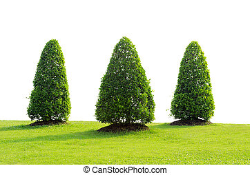 Trees with green grass isolated