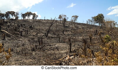 After Forest Fire. - Ashes after a fire in the forest....