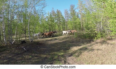 Herd your horses graze in nature Full HD footage