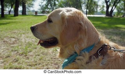 Cute purebred dog enjoying sunny weather in the park - Nice...