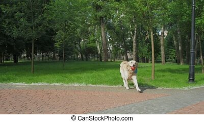 Cute dog running with a ball in its mouth - Playful animal....