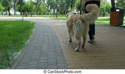 Rear view of a pleasant woman walking with a dog - Peaceful...