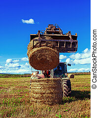 Harvested wheat field with a combine harvester in august on...