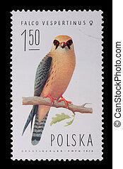 Poland - CIRCA 1974: A stamp - Falco vespertinus - Poland -...
