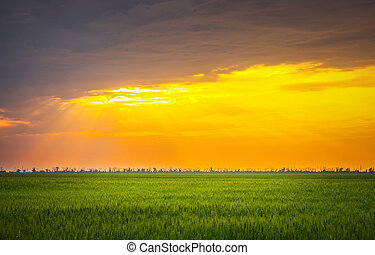 Bright sunset over wheat field. Composition of nature