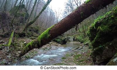 Stream river in autumn forest