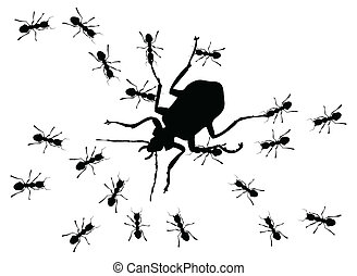 Hunting of ants for the big bug. A vector illustration