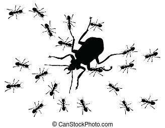 caça, formigas, grande, erro, Um, vetorial,...
