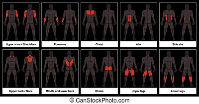 Muscle Chart Male Body Parts Black Background - Muscle chart...