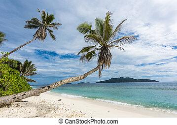 Anse Petite - Beautiful palm tree over the beach Anse...