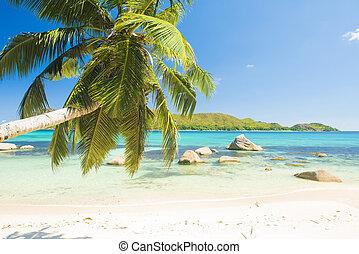 Anse Boudin - Beautiful beach Anse Boudin seen from under...