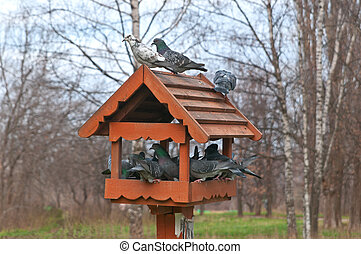 Overcrowded bird feeder - Overcrowded Bird Feeder with a Lot...