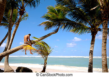 Man sitting on palm - A young man sitting on a palm which is...