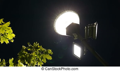 Street Light to Green Leaves Tree Pan - Street light to...
