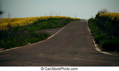 Asphalted Country Road Through Rapeseed Field - Apshalted...