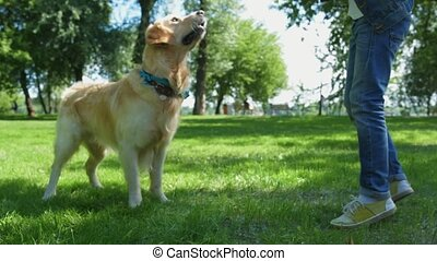 Low angle of little boy playing with his dog outdoors -...