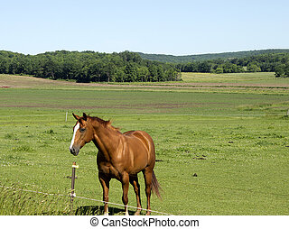 One lone horse