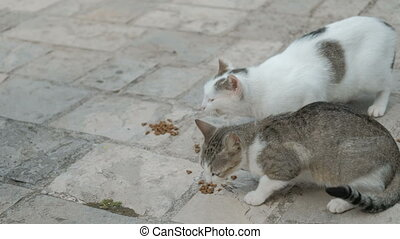 Two cats sitting on ground, eating cat food outdoors in...