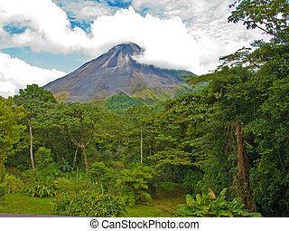 Jungle Landscape - Costa Rican jungle landscape with the...