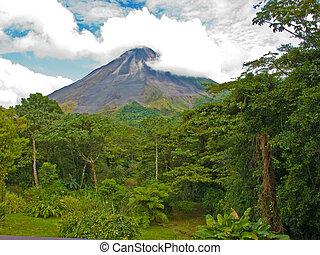 Jungle Landscape - Costa Rican jungle landscape with the...