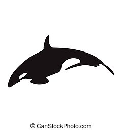 Isolated abstract assasin whale, Animal Vector illustration