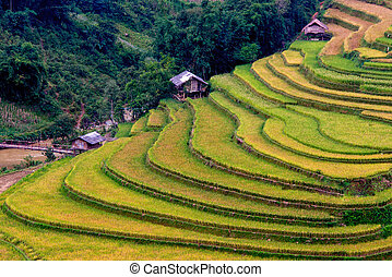 Rice terrace and some small huts in the ladder
