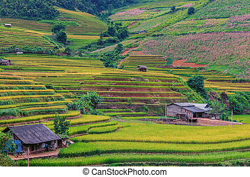 Beautiful landscape view of rice terrace and small house