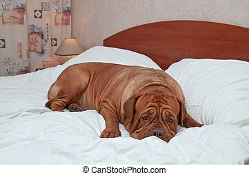 Big Goodnight Dog on a Bed