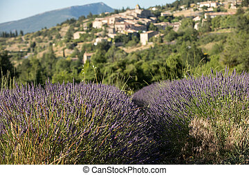 a lavender field with the village of Aurel beyond, the...