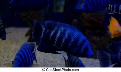 fish underwater in ocean. Fish swim in a sea video of...