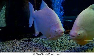 fish underwater in ocean. Fish swim in a sea of video...