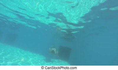 The man dives swimming under the water. Happy man swims underwater in swimming pool