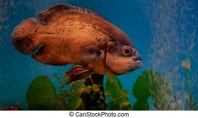 fish beautiful underwater in ocean. Fish swim in a sea of...