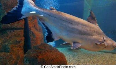 fish underwater in ocean. Fish swim in a video 4k sea of...