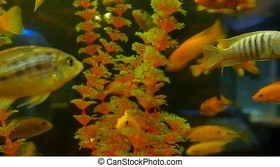 fish underwater in ocean. Fish swim in a sea of beautiful...