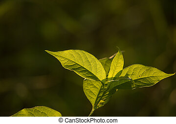 A beautiful green leaves on a branch in sun. Vibrant sunny...