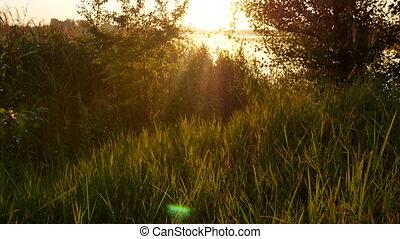 Sunset dawn grass nature