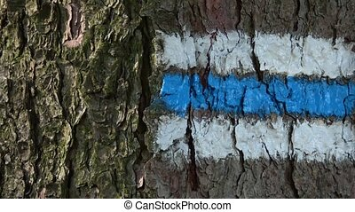 Tourist sign on the tree bark. Colorful tourist sign or mark...