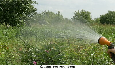 Watering flowers in the home garden. Splashes of water pour...