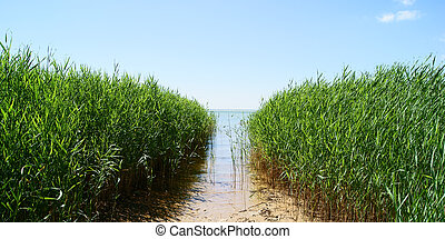 Azov sea - Path through reed grass to the sea