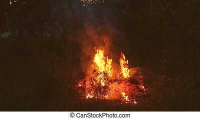 Forest fire danger - Start of Fire in the forest. Human...