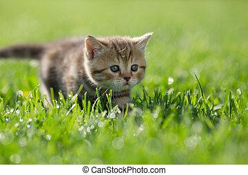Little kitten steal in green grass