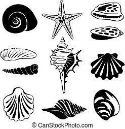 Black monochrome illustration of marine shells. Vector silhouette isolate