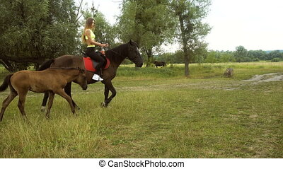 slender lady rides horses on the grass near the foal -...