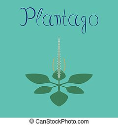 flat illustration on background plant Plantago - flat...