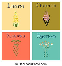 assembly flat Illustrations Chamerion Linaria Euphorbia...