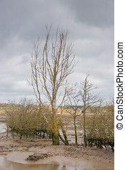 Mudflats Nature Reserve. - Low tide on the mudflats of a...