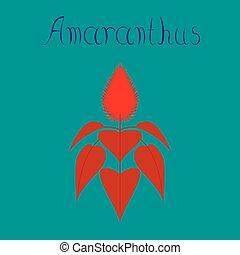 flat illustration on background herb amaranthus - flat...