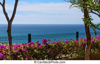 Sea of Cortez in Mexico - Sea of Cortez on the horizon with...